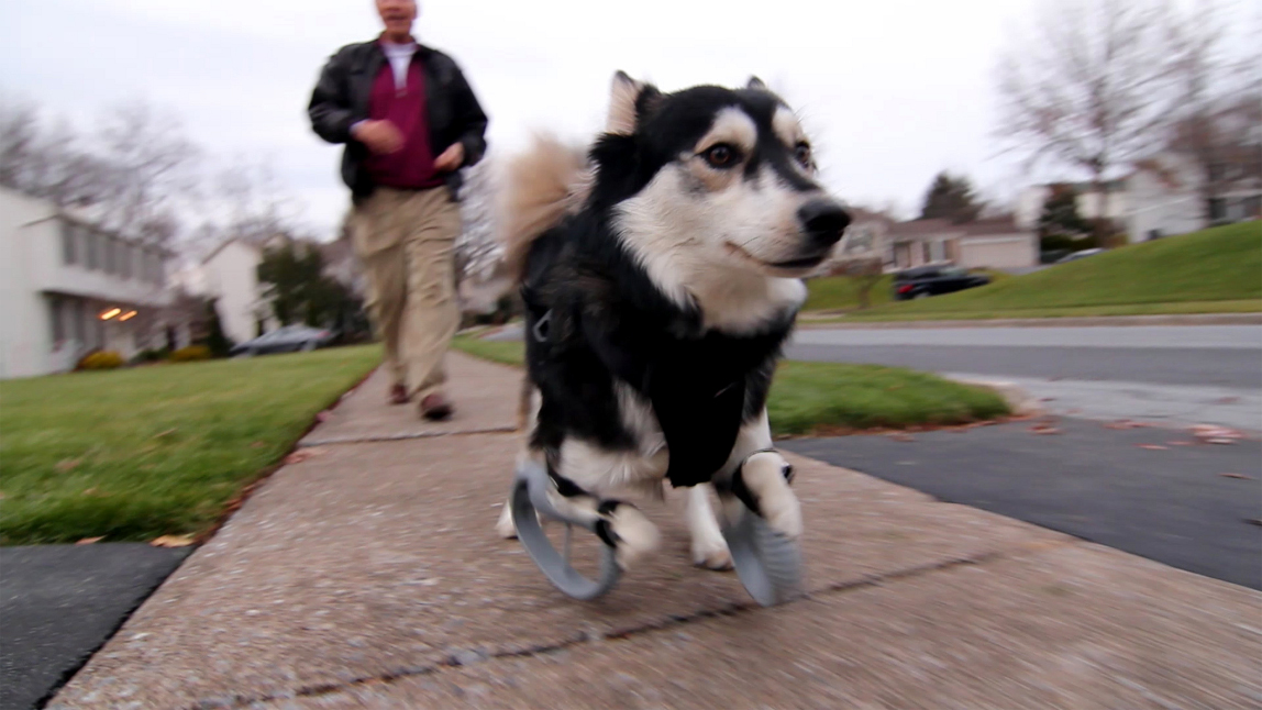 Derby the Dog 3D Printed Legs