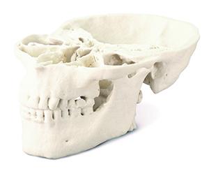 Modelo de cráneo médico monocromo impreso en ProJet CJP 360