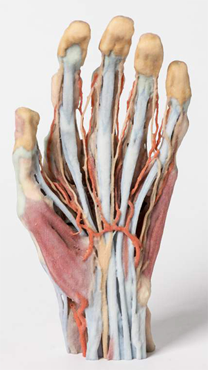 3D printed, full color hand for use by medical students
