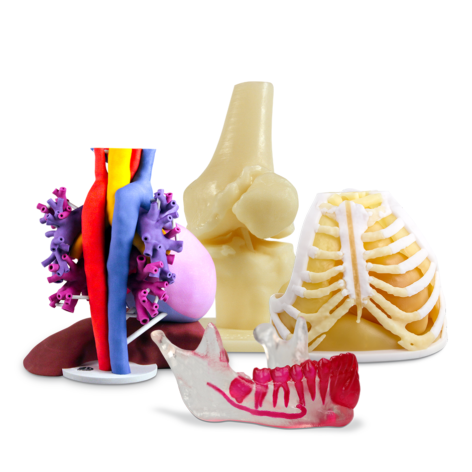 On Demand Anatomical Models 3d Systems