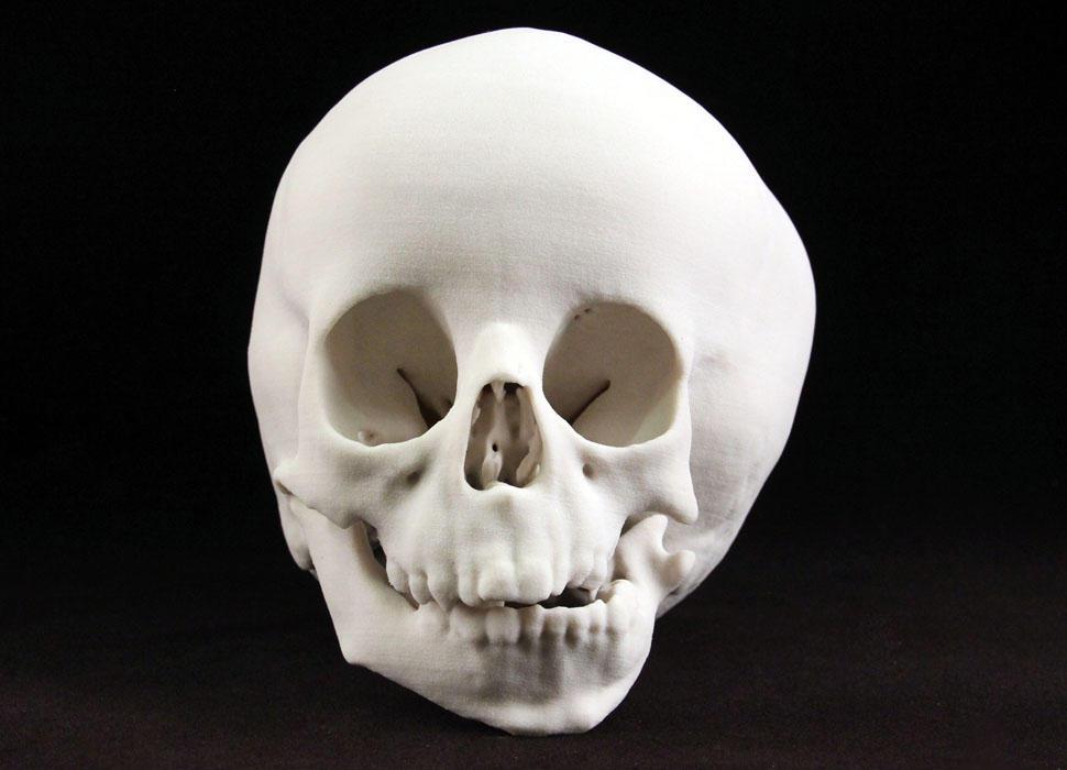 CJP White Pediatric Skull