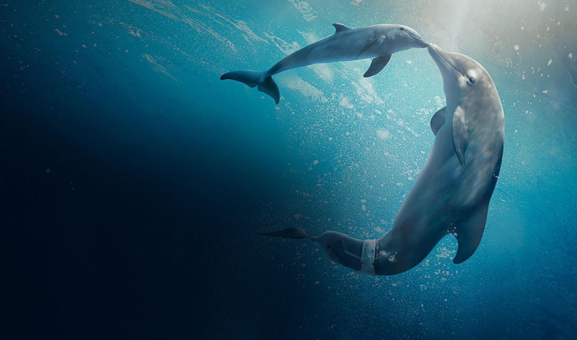 3D Scanning of injured dolphin creates prosthetic tail