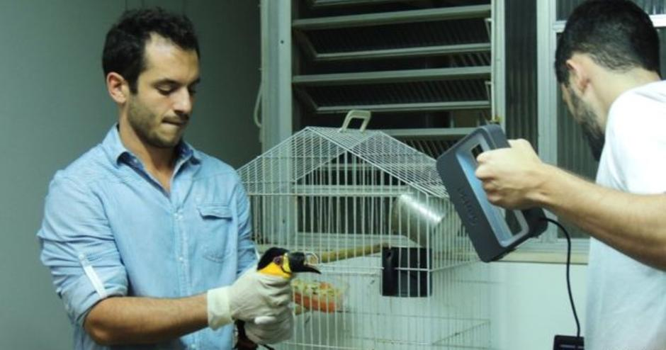 Toucan Scan: Sense Helps Restore Injured Beak