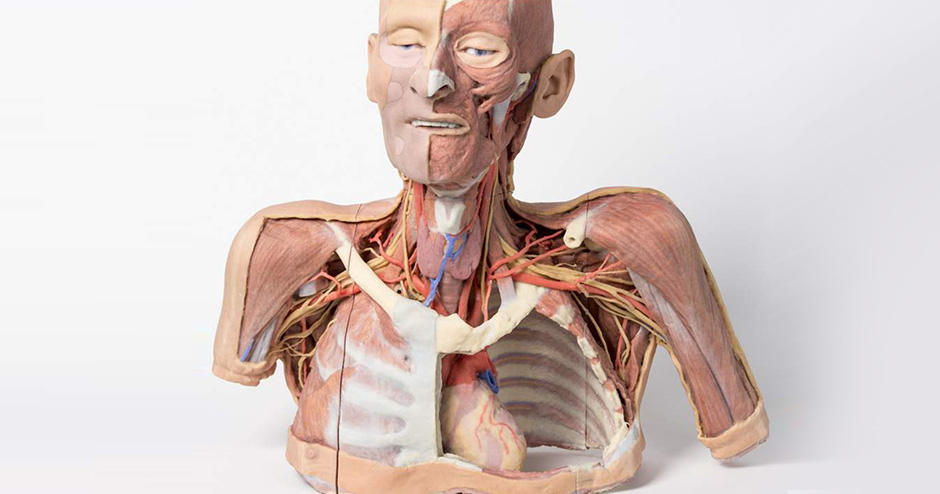 Customer Story 3d Printed Cadavers From Monash University Poised to Revolutionize Human Anatomy Study tn
